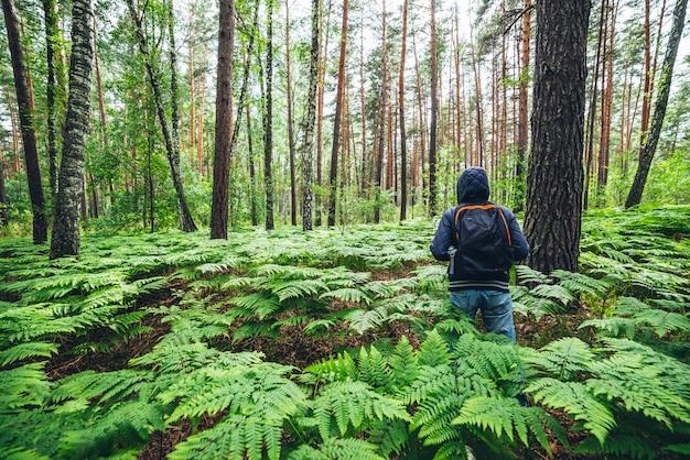 Ragazzo con zaino nella soleggiata foresta estiva tra lussureggianti boschetti di felci