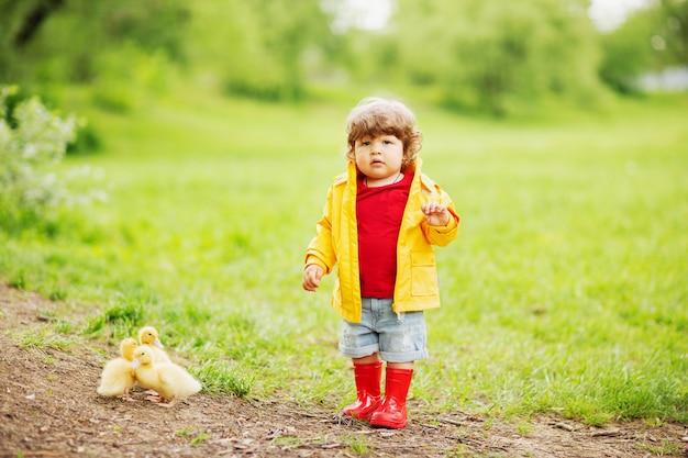 Ragazzo paffuto del bambino che indossa impermeabile giallo e stivali di gomma rossi che camminano con gli anatroccoli