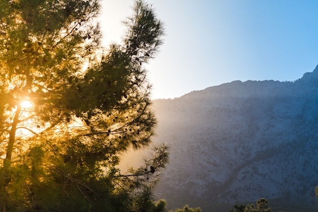 Raggi del sole al tramonto dietro una montagna attraverso i rami di pino