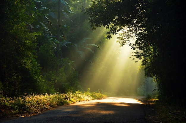 Raggi del sole del mattino che penetra attraverso gli alberi