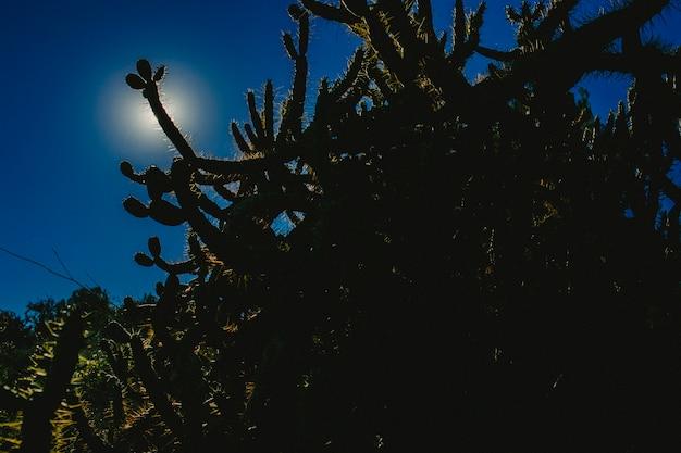 Raggi di sole che attraversano una foresta mediterranea.