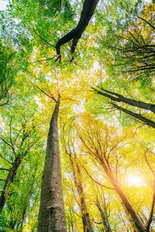 Raggi dorati del sole di mattina sull'erba verde in autunno.