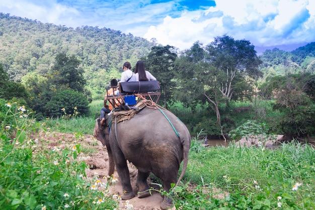 Raggruppi i turisti per guidare su un elefante in foresta chiang mai
