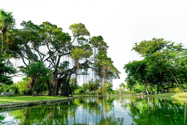 Raintree e molti alberi verdi nel parco e nello stagno.