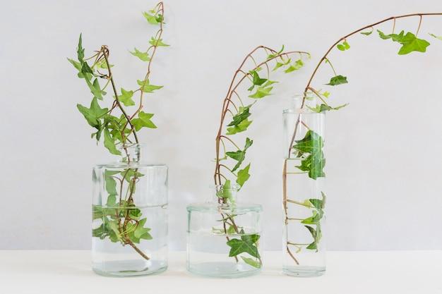 Rametti di edera freschi nel diverso tipo di vaso di vetro sul tavolo