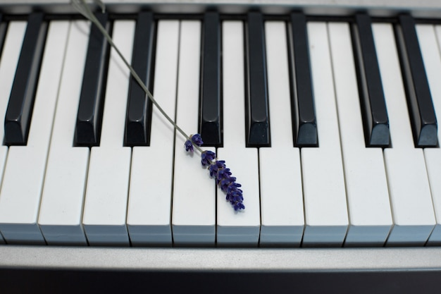 Rametto di lavanda fresca sui tasti del pianoforte