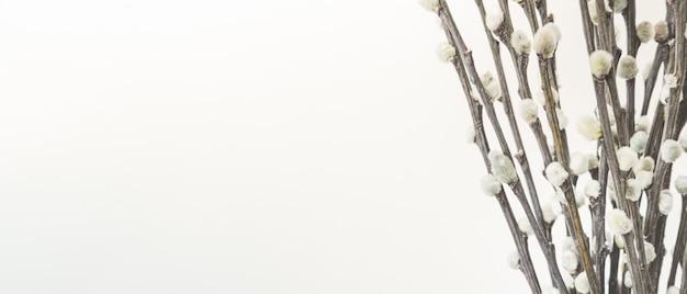 Rami con gemme, vista ravvicinata. concetto di inizio primavera, marzo, risveglio della natura o anticipazione della stagione calda