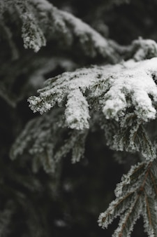 Rami congelati di foglie e neve