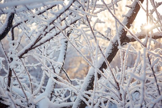 Rami degli alberi nella neve giornata invernale di sole.