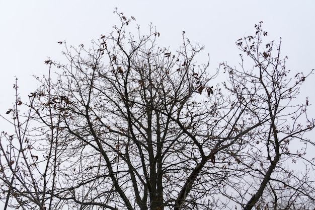 Rami di alberi senza foglie