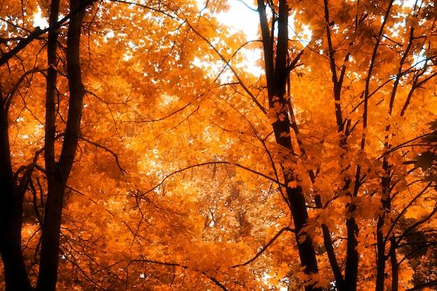 Rami di albero nel parco di autunno
