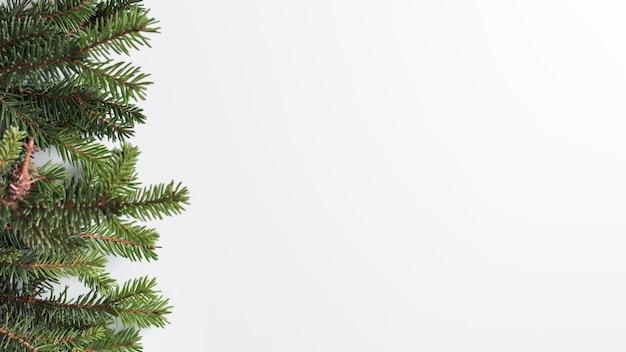 Rami di conifere su scrivania leggera