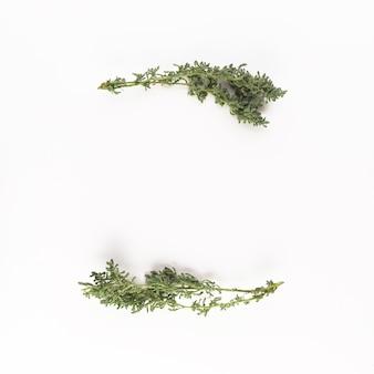Rami di conifere verdi sullo scrittorio chiaro