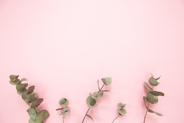 Rami di eucalipto su sfondo rosa millenario con spazio di copia. eucalipto inferiore