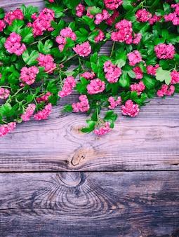 Rami di fioritura di biancospino con fiori rossi