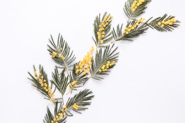 Rami di piante brillanti sparsi sul tavolo bianco