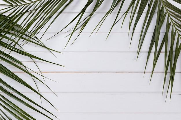 Rami di piante verdi su legno bianco