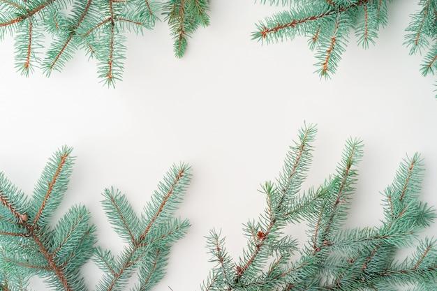 Rami di pino di natale