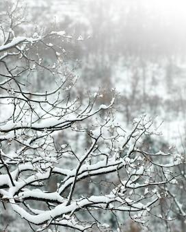 Rami di un albero coperto di neve
