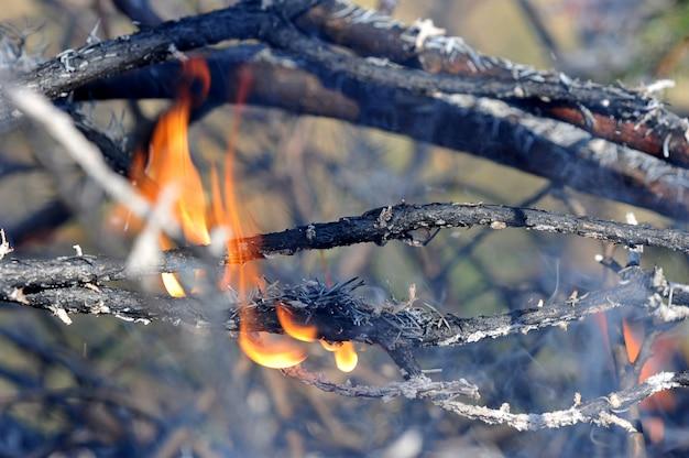 Rami in fiamme