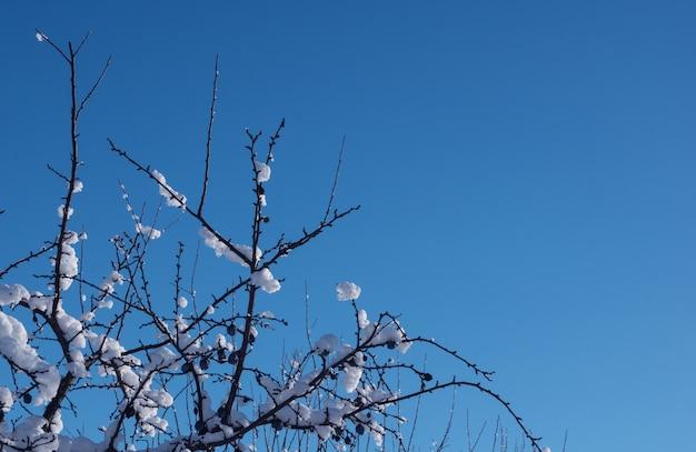 Rami nella neve contro il cielo blu.