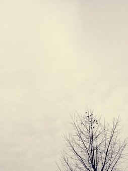Rami secchi dell'albero con il cielo nuvoloso