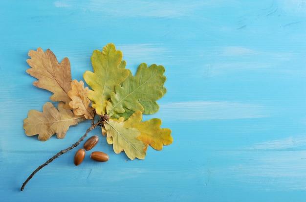 Ramifichi con le foglie e le ghiande della quercia di autunno su una superficie di legno blu