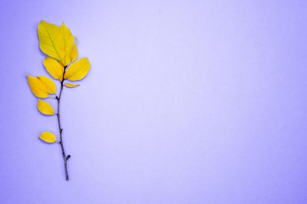 Ramo con foglie gialle, prugna, su uno sfondo blu chiaro