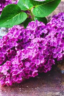Ramo con lillà di primavera