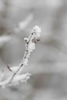 Ramo congelato messo a fuoco nella stagione invernale