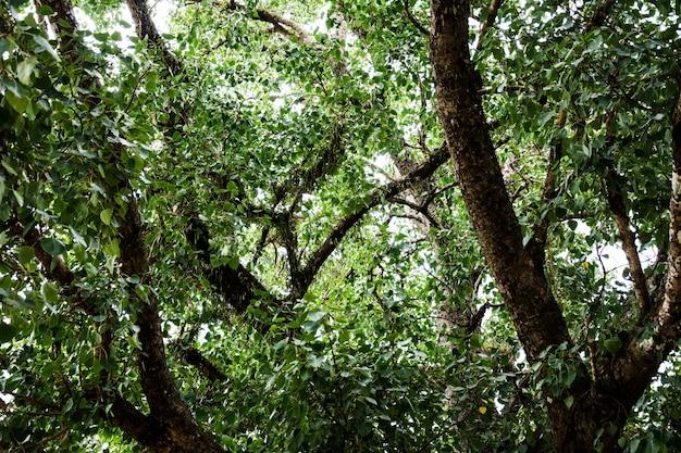 Ramo coperto di vite nella foresta pluviale con la luce che splende attraverso