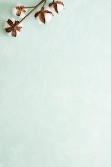 Ramo del baccello del cotone su fondo verde