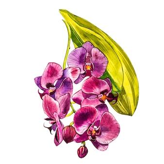 Ramo dell'orchidea dell'acquerello, illustrazione floreale disegnata a mano isolata su un bianco. illustrazione dell'acquerello della flora, pittura botanica, disegno della mano.