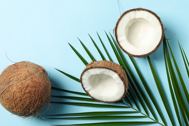 Ramo della palma e della noce di cocco sulla tavola blu, vista superiore
