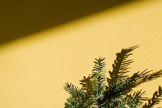Ramo di abete con una dura ombra su uno sfondo giallo. scheda creativa di natale con lo spazio della copia