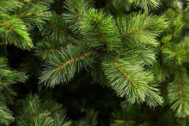 Ramo di abete verde albero di natale. aghi verdi. prepararsi per il nuovo anno