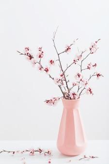 Ramo di fioritura della ciliegia in vaso su fondo bianco
