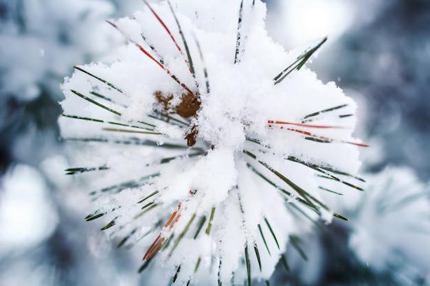 Ramo di pino sotto forma di fiocchi di neve ricoperti di neve
