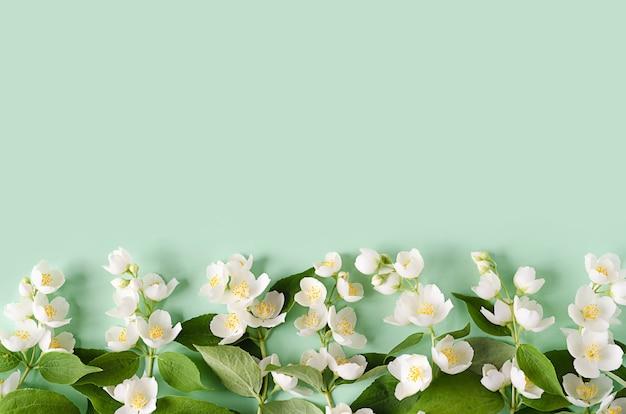 Ramo fiorito di gelsomino.