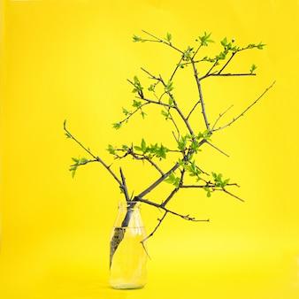 Ramo grazioso di un vaso di vetro. sfondo giallo