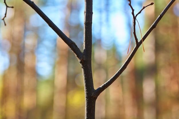 Ramo sottile nella foresta su una foresta vaga.