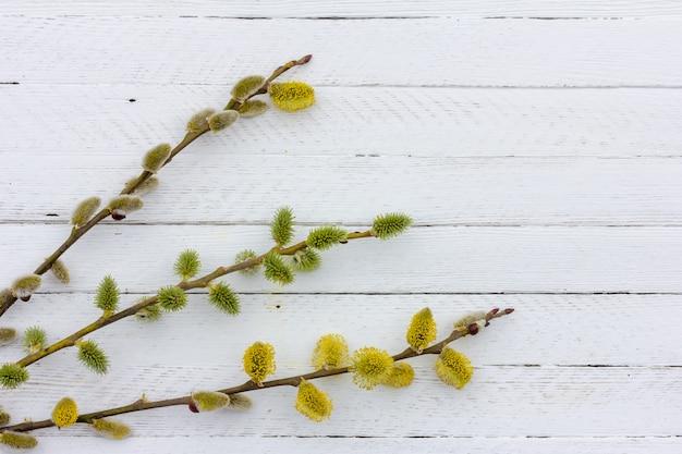 Ramoscelli del salice di fioritura su fondo di legno bianco con lo spazio della copia, concetto di pasqua della molla
