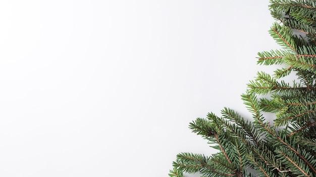Ramoscelli di conifere su lavagna luminosa