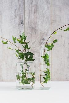 Ramoscelli di edera verde nel diverso tipo di vaso di vetro contro la parete in legno