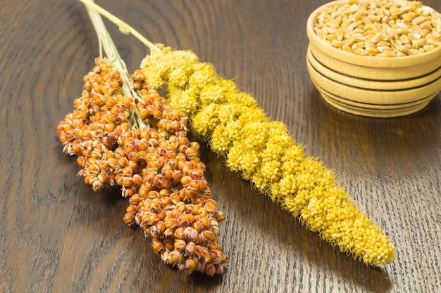 Ramoscelli di sorgo e miglio giallo. frumento nel cestino di legno