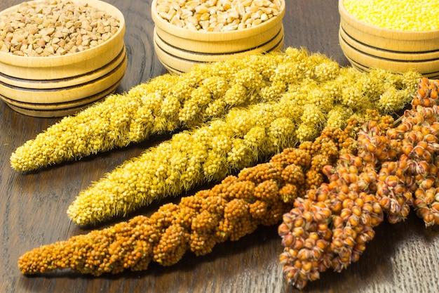 Ramoscelli di sorgo, miglio rosso e giallo. frumento, grano saraceno e miglio nel cesto di legno