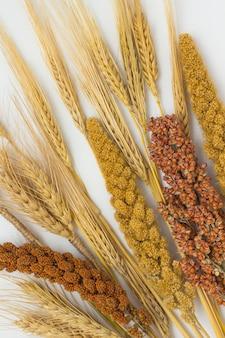 Ramoscelli di sorgo, miglio rosso e giallo; orzo e grano su una superficie bianca