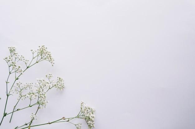Ramoscelli fioriti disposti su blu