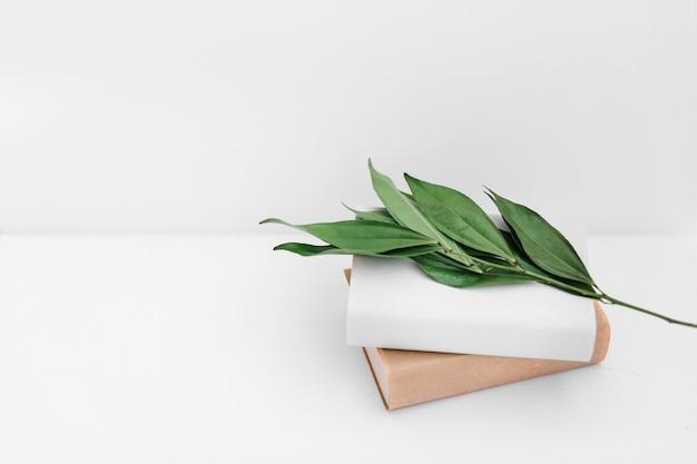Ramoscello delle foglie verdi con due libri sul contesto bianco