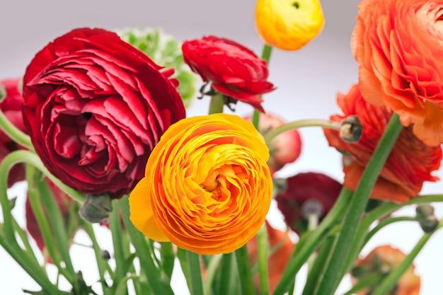 Ranunkulyus bouquet di fiori rossi su una parete bianca